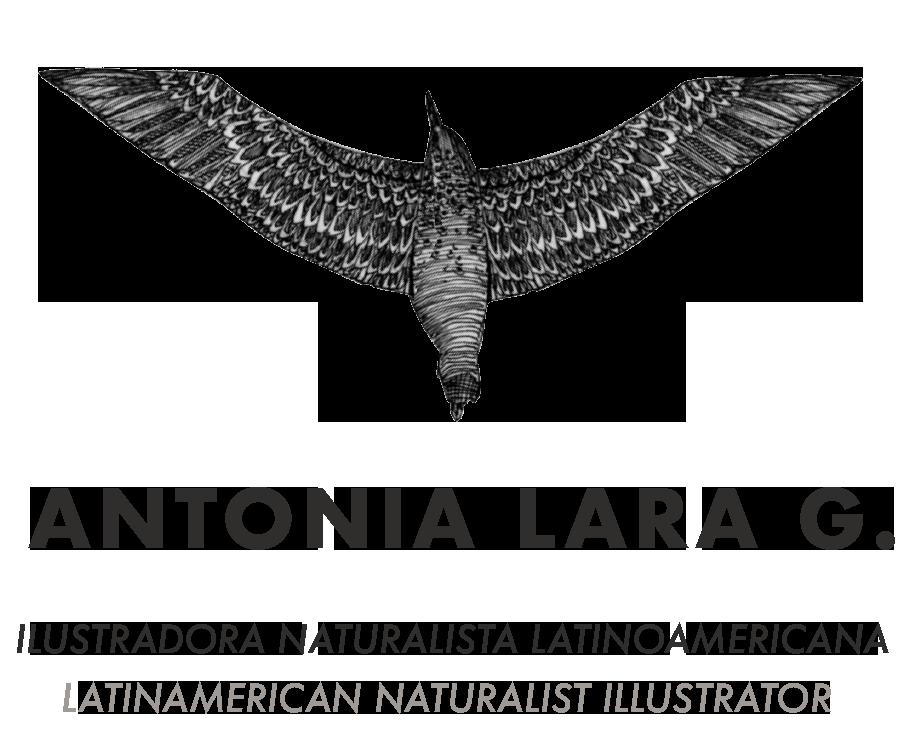 Antonia Lara G.