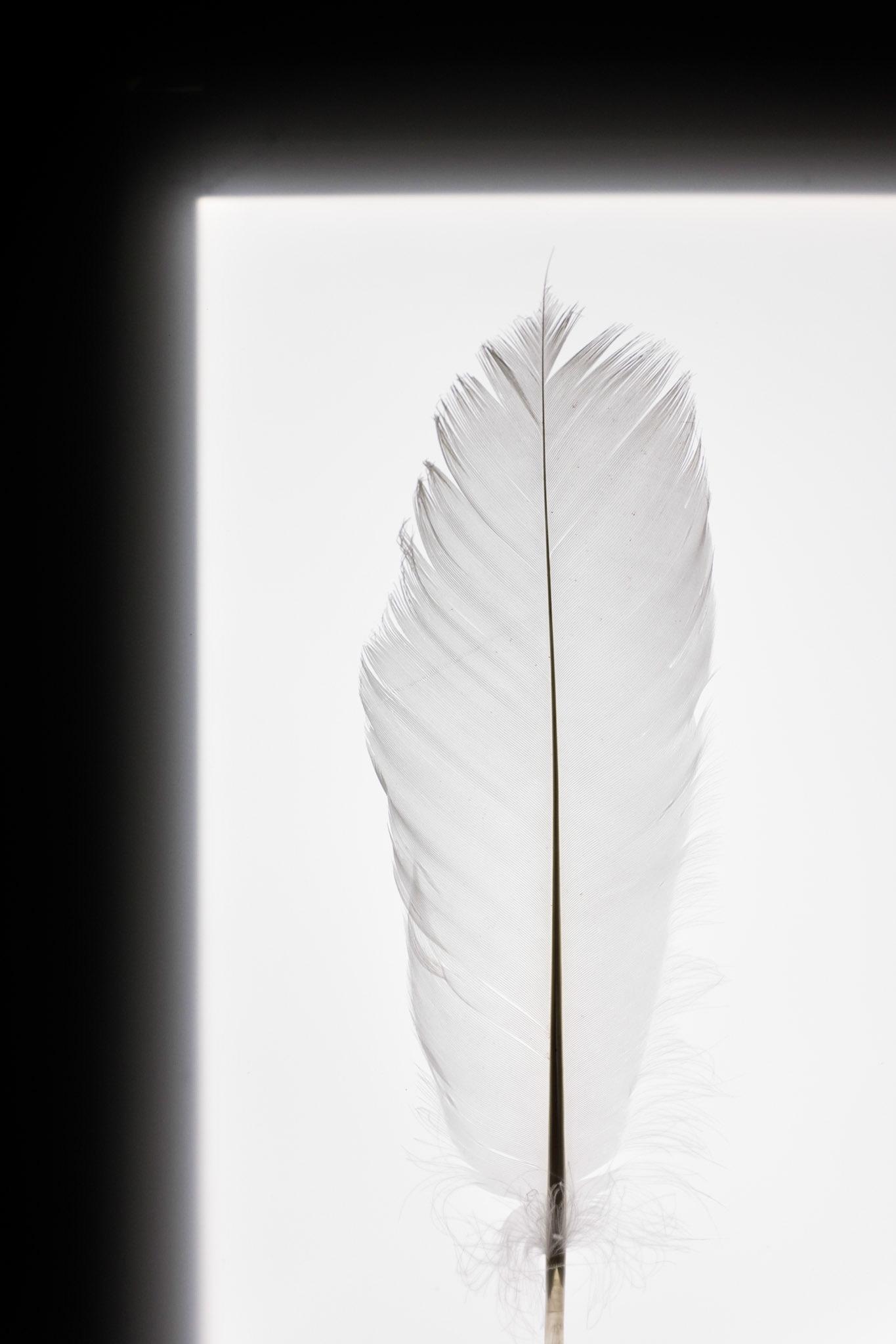 Картинки чистый лист перо