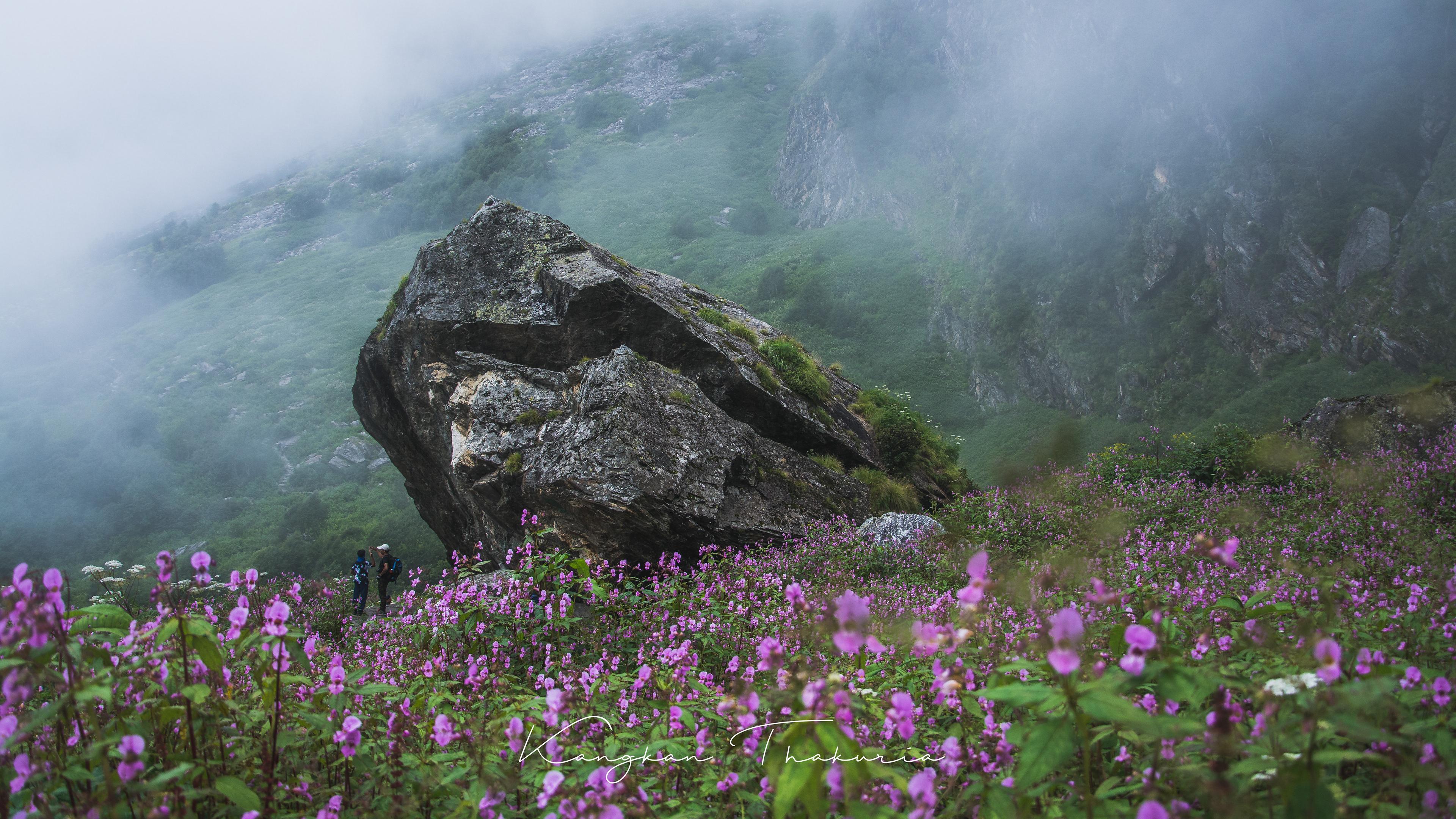 долина цветов уникальный уголок индии фото часть