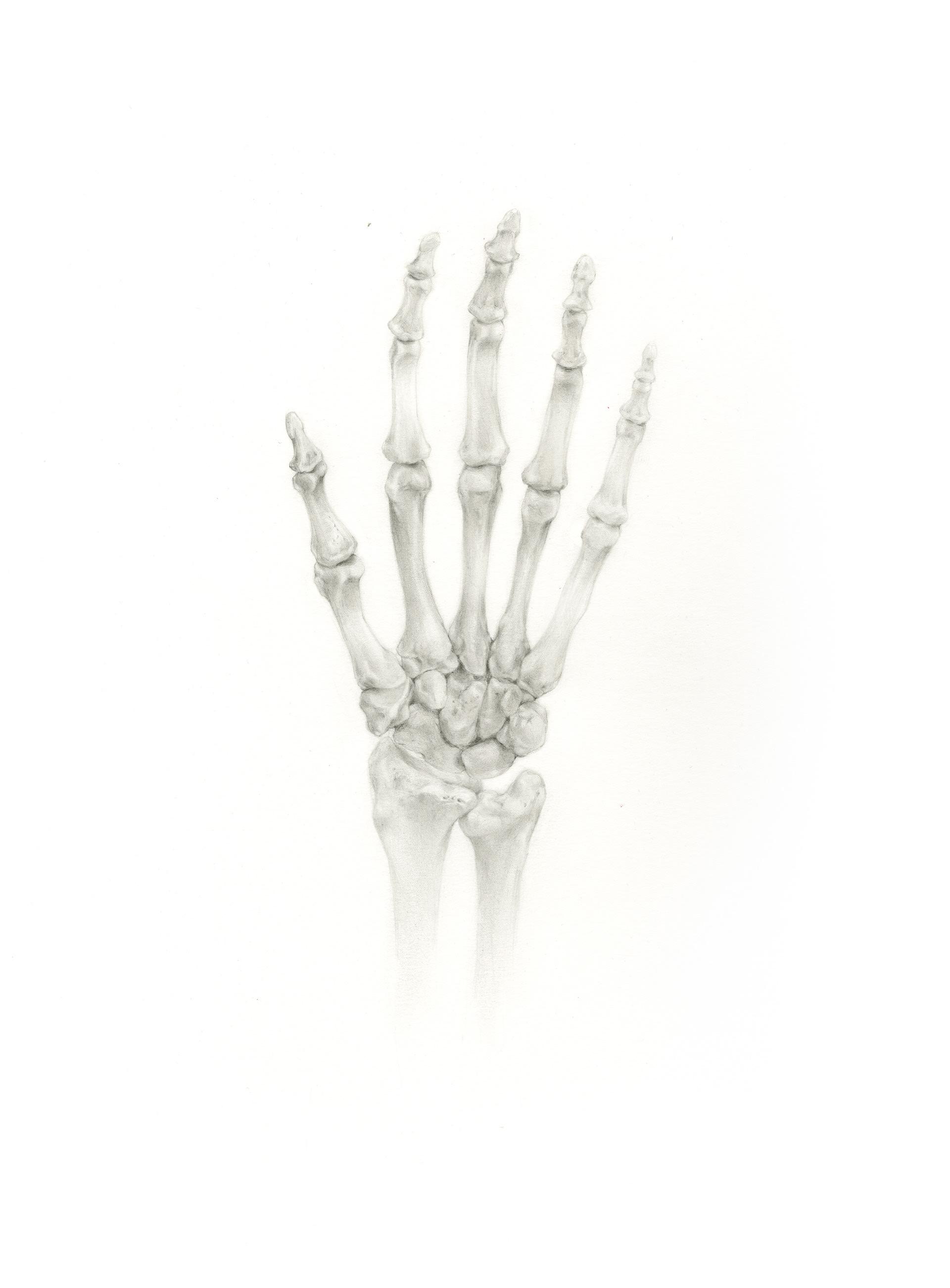 Jessica Foley Hand Bone Illustration