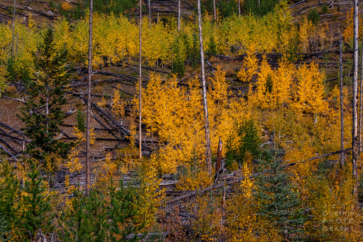 Jens Gaethje Photography Amp Fine Art Photo Prints New Green Cycle Of Life Indian Summer