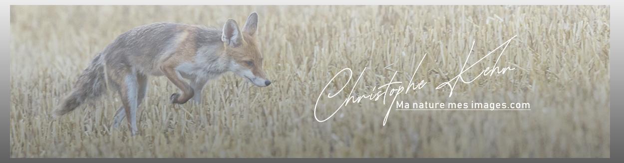 christophe kehr