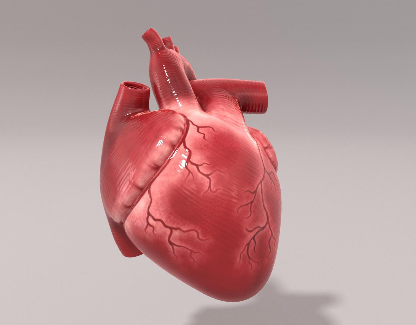 Сердце человеческая картинка
