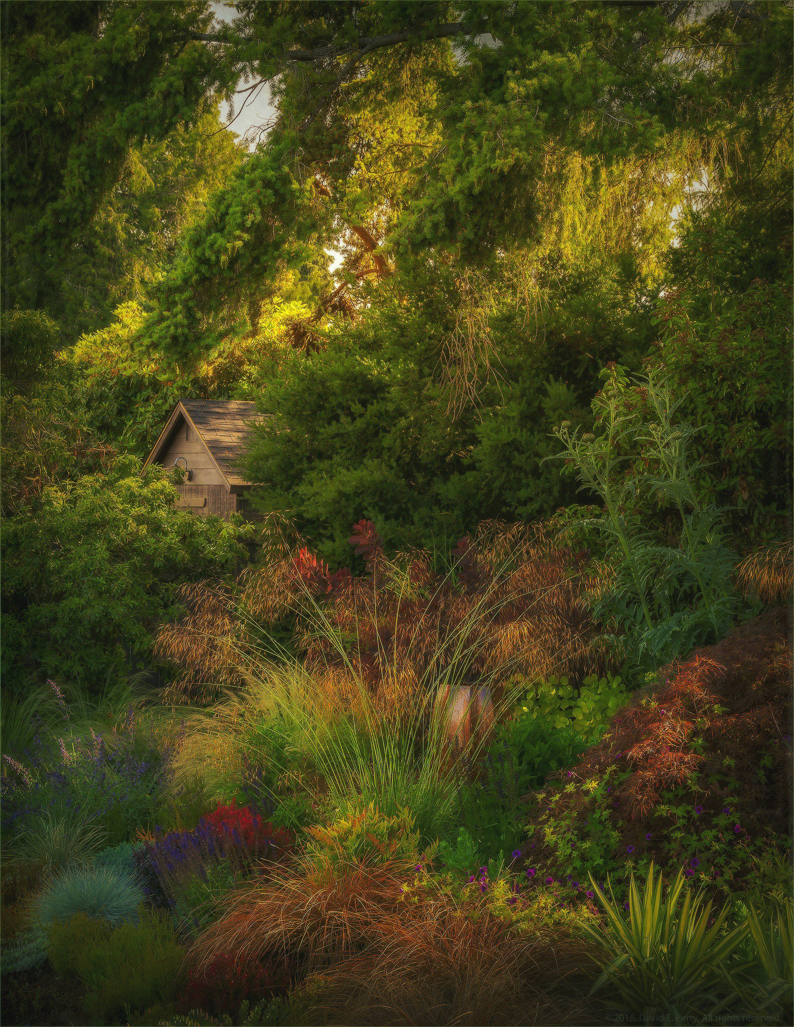 DAVID PERRY PHOTOGRAPHER - Garden Landscapes