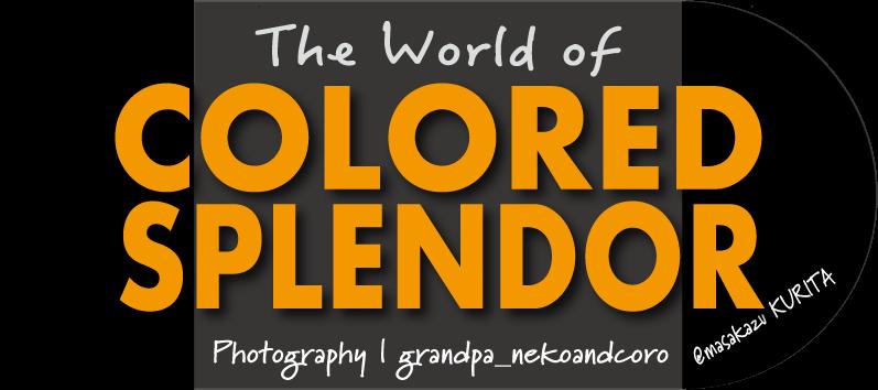 The World of Colored Splendor( English)