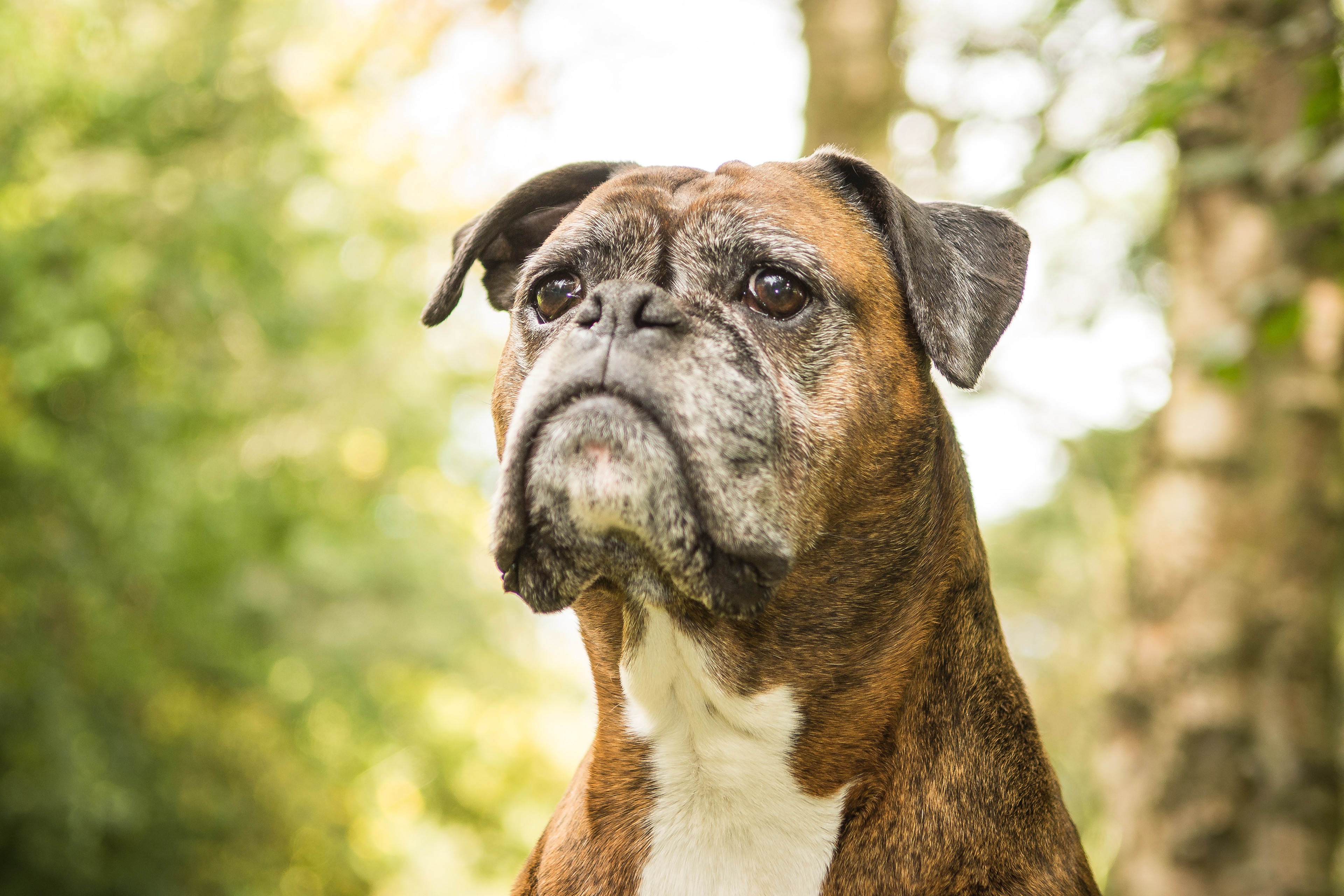 Pet Photography | Aberdeen | Iska\'s Images - Products