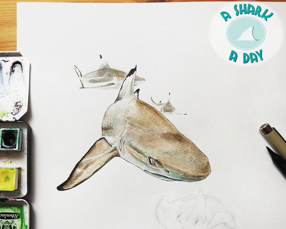 tiki s design illustration portfolio a shark a day
